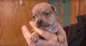Trovare una mamma per il cucciolo orfano sembrava impossibile, ma i medici hanno un'idea brillante