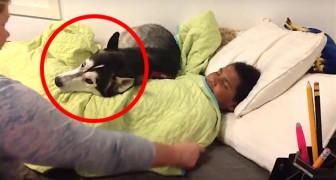 La mamma vuole svegliare suo figlio, ma QUALCUNO non ha intenzione di stare a guardare
