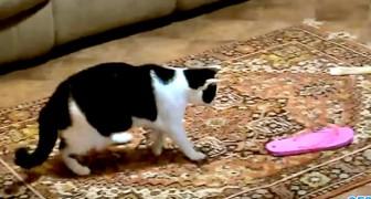 Gatti e infradito: guardate questo video... vi farà piegare dalle risate!