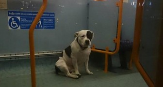 Een hond breng de hele nacht door in een bus in afwachting van de terugkeer van zijn baasje die hem daar achterliet