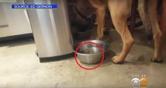 Een hond redt een kolibrie: een jaar later zijn ze onafscheidelijk!