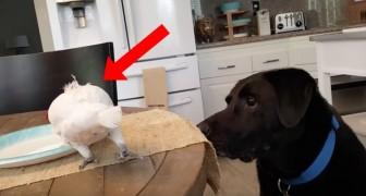 O papagaio come e o cachorro fica olhando: o que acontece depois é uma fofura só!