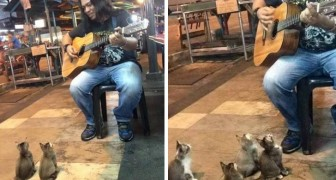 A busker is playing a song with his guitar --- but look at who has come to listen. Wow!