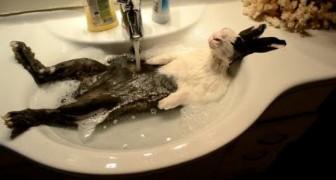 Si stò facendo il bagno e allora?