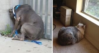 Si votre chien ou chat fait ce geste, emmenez-le chez le vétérinaire: il peut être en danger!