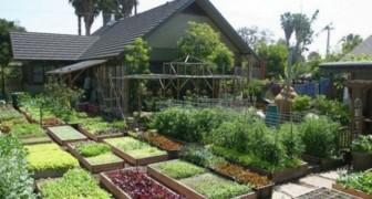 Hace 10 años han creado una pequeña huerta: hoy producen 2 toneladas de comida en solo 400 mts. cuadrados de espacio