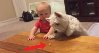 Een kind en een hond strijden om het laatste stukje kip. De eindstand? Bekijk het zelf!