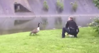 A goose calls out to a police agent for help!
