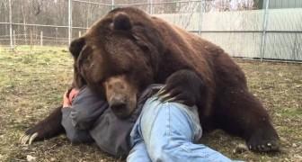 22 anni fa trovò questo orso orfano: guardate come si comporta oggi...