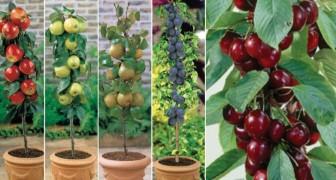 Forse non lo sai, ma puoi coltivare la frutta anche se non hai un giardino. Ecco come