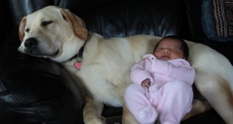 Un cane schiaccia un pisolino insieme alla nuova arrivata... Momenti di ESTREMA tenerezza