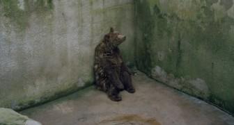 Tutta la tristezza degli animali detenuti negli zoo racchiusa in una sola immagine
