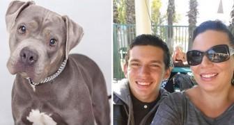 Questo ragazzo non ha mai abbracciato su madre. Ma con l'arrivo del cane... cambia tutto!