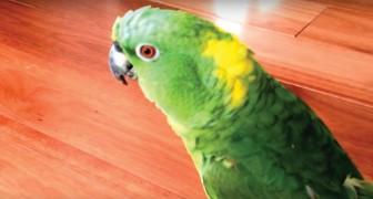 Deze papegaai hoort een grappig geluid: zijn reactie is hilarisch!