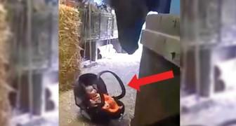 Der Kleine weint in seinem Kindersitz... Schaut mal, wie das Pferd ihn beruhigt