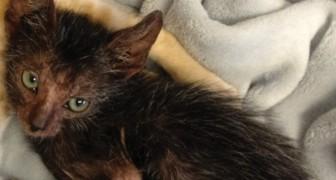 Ze Vinden Een Zwerfkat Met Kittens, Maar De Redders Merken Al Gauw Dat Eén Van Hen Anders Is