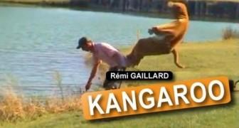 Rémi Gaillard - Il Canguro