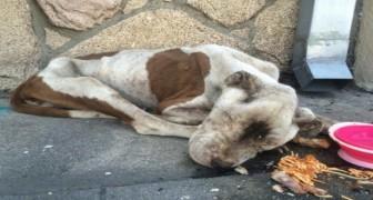 Toen ze haar vonden woog ze nog maar 11 kg, maar haar liefde voor het leven deed iedereen versteld staan!