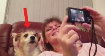 Vuole scattare un selfie con il suo cane: la sua reazione? Che spettacolo!