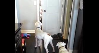 Il miglior saluto di benvenuto? Ce la danno ogni giorno i nostri cani!