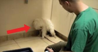 Hij werd een uur voordat hij zou worden ingeslapen gered: hun eerste ontmoeting bezorgt je kippenvel!