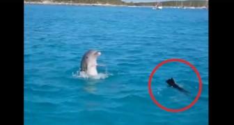 Il loro cane si getta in acqua... l'immediata reazione del delfino li fa urlare di stupore!