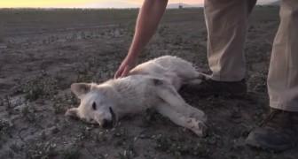 Elle est abandonnée dans le désert: son sauvetage est l'un des plus difficiles!