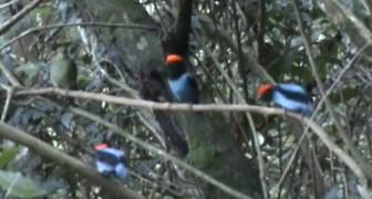 3 uccelli si posizionano su un ramo: dopo qualche secondo non crederete ai vostri occhi!