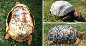 See how modern technology saved this turtle!