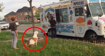 A dog gets in line to buy an ice cream cone --- And while he waits? Wow!