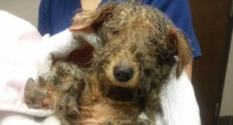 Shot and left to die -- but she was rescued and now she is unrecognizable!