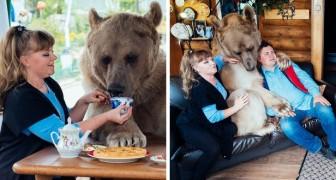 Ils trouvent un ours orphelin dans la forêt: voici comment ils vivent 23 ans après