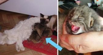 Ein Bauer findet 4 verwaiste Katzen, aber wenig später merkt er, dass es keine normalen Katzen sind