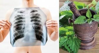 Stop aux toxines : voici comment détoxifier et purifier vos poumons de la nicotine.