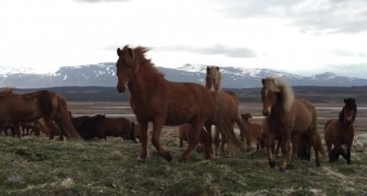 A man films a herd of wild horses --- but when he turns the camera . . . WOW !!!
