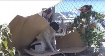 Deze lieve pitbull woont op een verlaten binnenplaats: haar reactie als ze wordt aangehaald is aangrijpend!