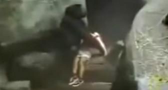 Nel 1996 un bimbo cadde nel recinto di uno zoo: la reazione del gorilla lasciò tutti di stucco
