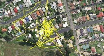 Attaccano un GPS al gatto e lo lasciano libero: ciò che rivela supera le loro aspettative