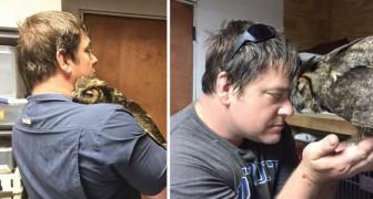 Ce hibou n'arrête pas d'embrasser l'homme qui lui a sauvé la vie