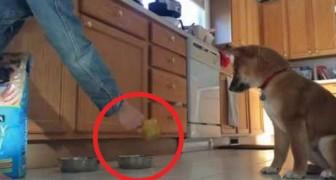 Ecco cosa fa questo cucciolo ogni volta che gli riempiono la ciotola. Non è adorabile?