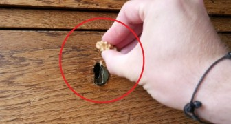 Rub a walnut on a piece of wooden furniture --- the result is impressive!