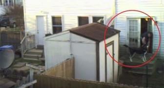 Durante 6 semanas ele filmou o cachorro do vizinho: confira o que ele descobriu
