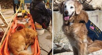 Se ne va l'ultimo cane eroe dell'11 settembre: ecco le toccanti immagini delle sue imprese