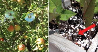 8 modi alternativi per tenere insetti e uccelli fuori dal giardino... Rispettando totalmente la natura