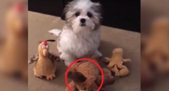 Wie is je beste vriend? Dit hondje twijfelt daar geen moment over... of toch wel?
