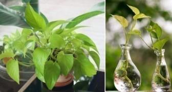 Volgens de NASA mag deze plant niet ontbreken in een appartement: zie hier waarom