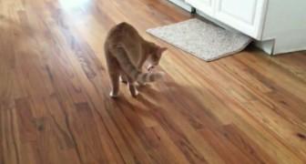 Parece un gato normal que juega, pero cuando se gira notaran un detalle increible