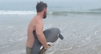 Do not miss the compassionate rescue of a beautiful beached dolphin!