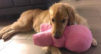 Il loro cane non rispondeva ai richiami: quando scoprono il motivo lo amano ancora di più!