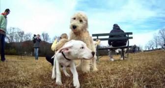 GoPro: un modo subjetivo desde los perros